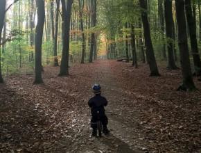 tur gennem skoven